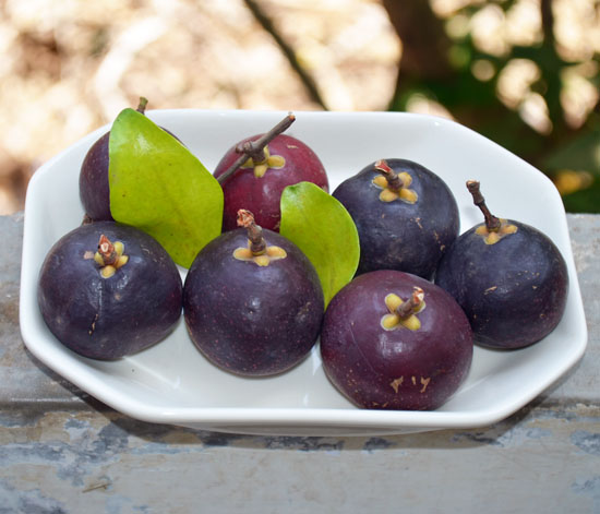 Kokam ratamba Fruit