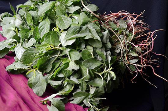 तांदूळज्याची भाजी हिरव्या माठाची भाजी