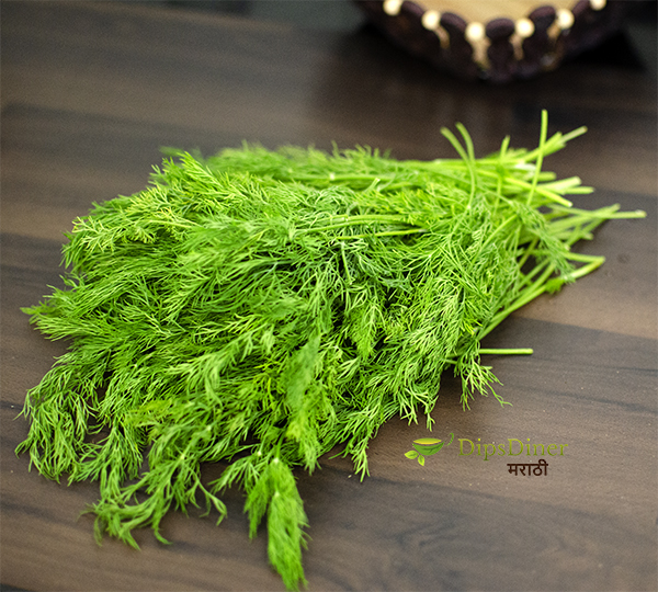 Dill Leaves Food Stlyle